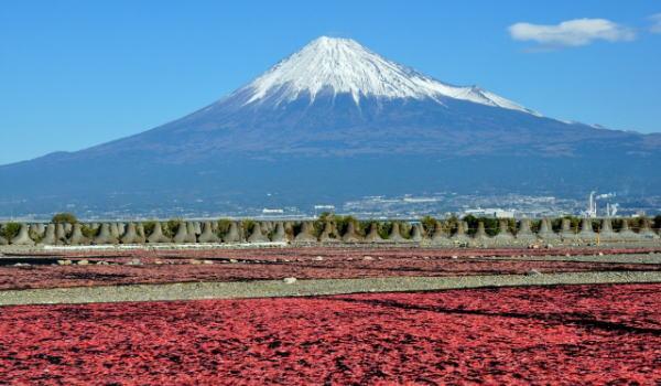 桜えび 富士山と桜えび