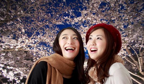 京都 夜桜 ライトアップ ランキング