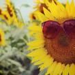 サングラス 紫外線対策 おすすめ